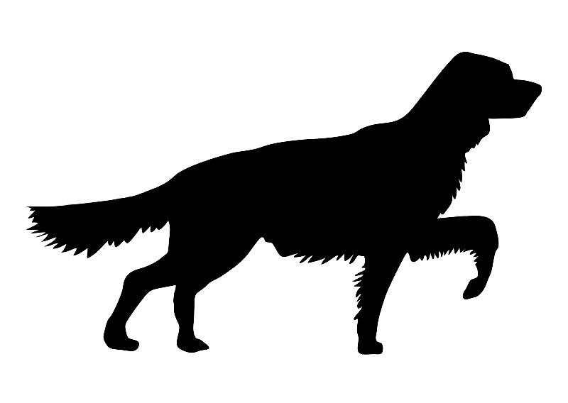 Dallas pet photographer dog silhouette