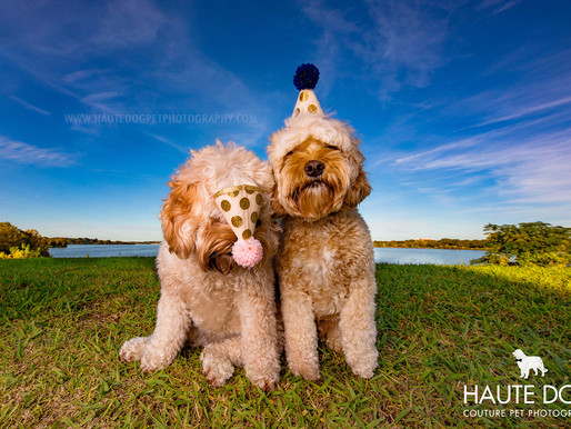 5 Years of Fashion Forward Pet Photography