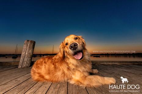 Golden Retriever smiles at White Rock Lake - Dallas pet photographer
