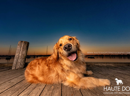 Sittin' on the Dock of the Bay | Dallas Dog Photography at White Rock Lake