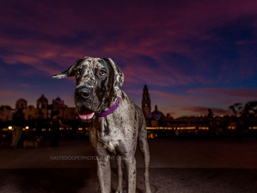 Dallas's Couture Pet Photographer | PANTONE 2018 Color of the Year