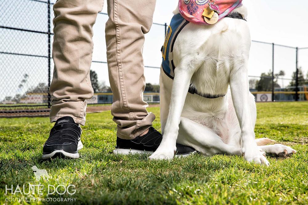Dallas Pet Photographer Haute Dog: Couture Pet Photography