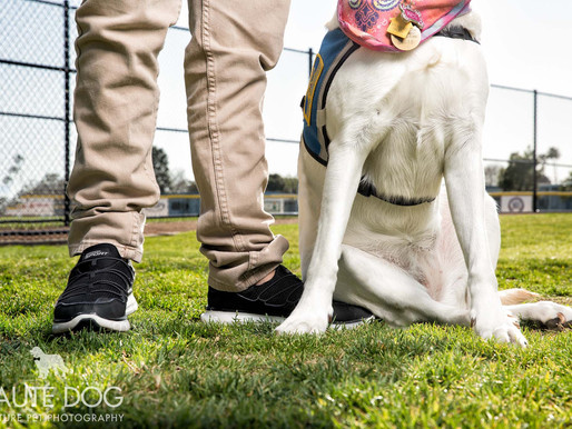 Some Angels Have Wings, Others Have Tails | Dallas Pet Photographer