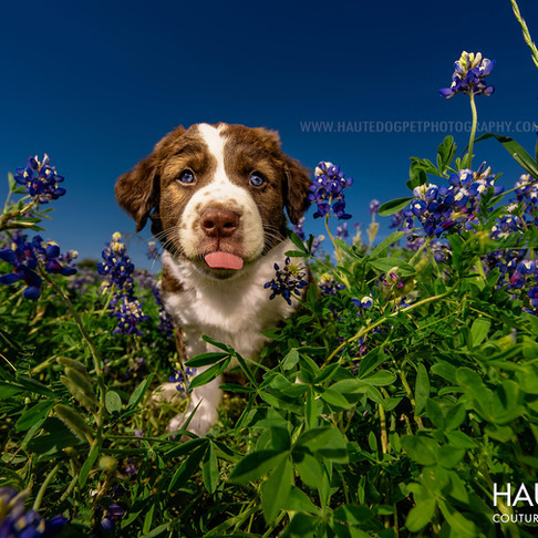 Dallas' Couture Pet Photographer | PANTONE 2020 Color of the Year