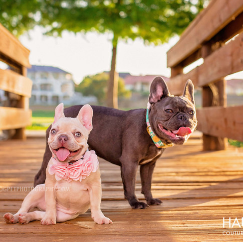 5 Tips to Prepare for Your Dallas Pet Photography Session