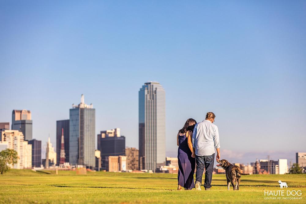 Mastiff family photo with Dallas skyline