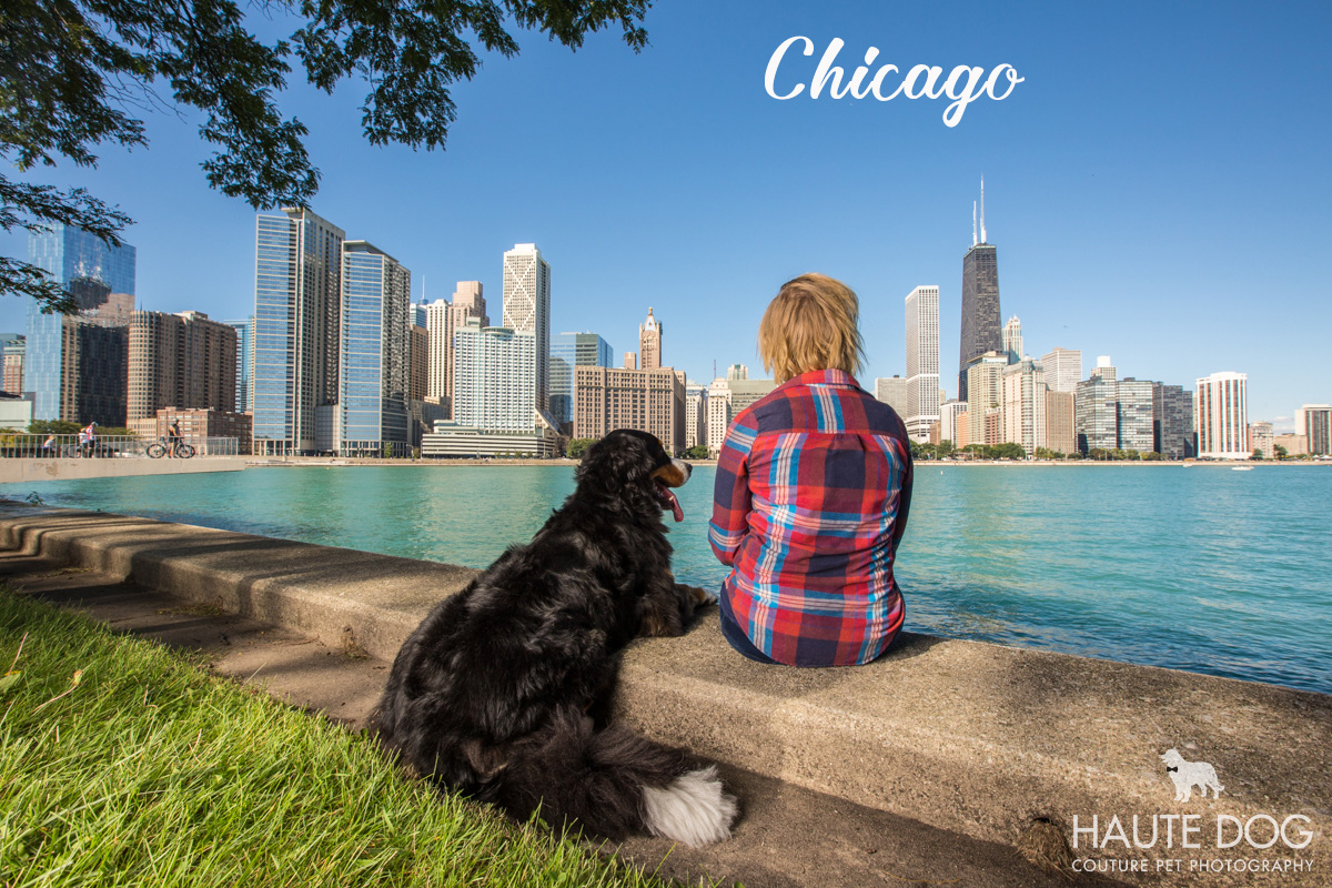 Dallas pet photographer in Chicago