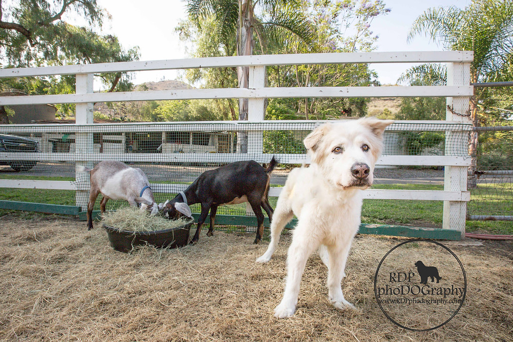 © RDP PhoDOGraphy   San Diego Dog Photographer