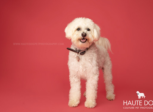 Dallas' Couture Pet Photographer | PANTONE 2019 Color of the Year
