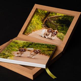 Dallas pet photography album