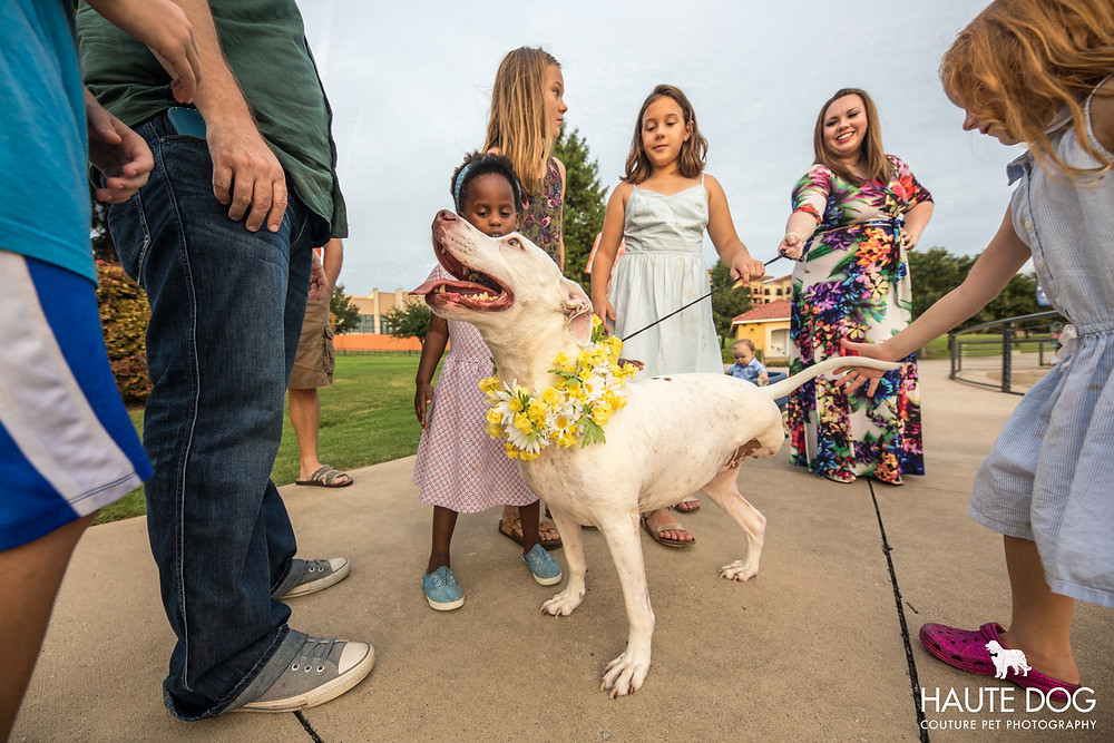 smiling pit bull with kids at Rockwall Harbor near Dallas | © Haute Dog: Couture Pet Photography