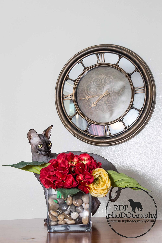 © RDP PhoDOGraphy | San Diego Cat Photographer