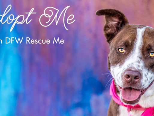 Daisy Mae Looking For Love | Dallas Adoptable Dog | Dallas Pet Photographer