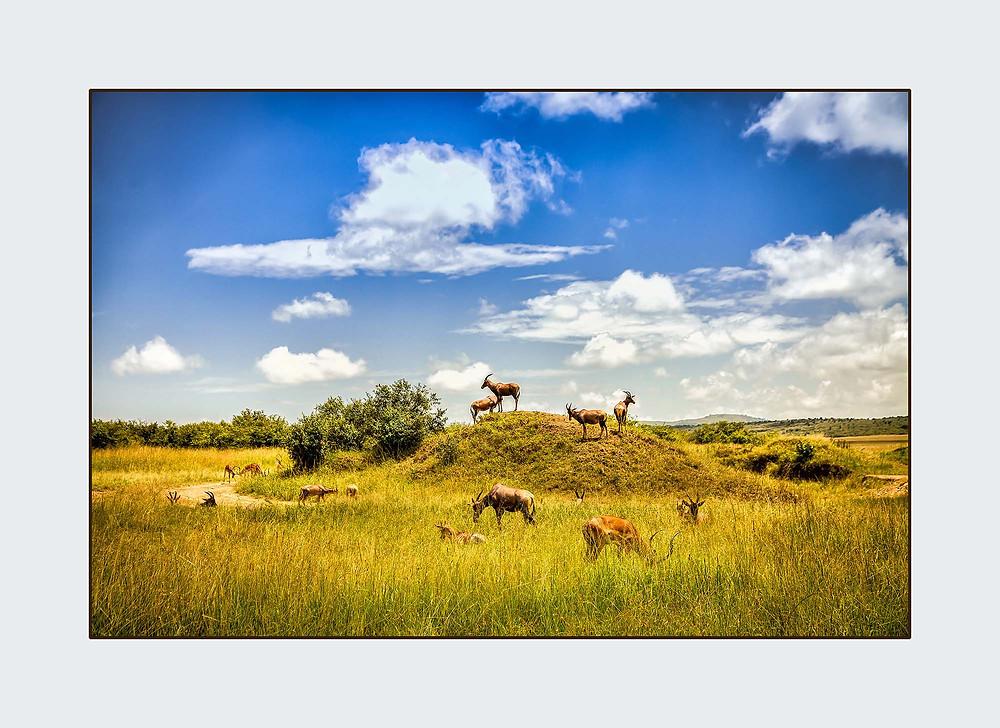 wild animals on the Serengeti