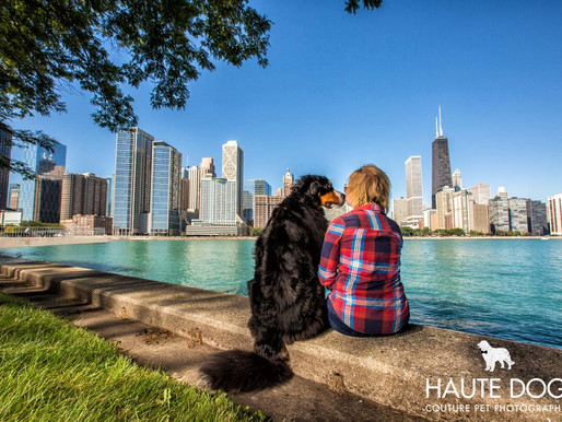 Major League Chicago Dog | Pet Photography Beyond Dallas