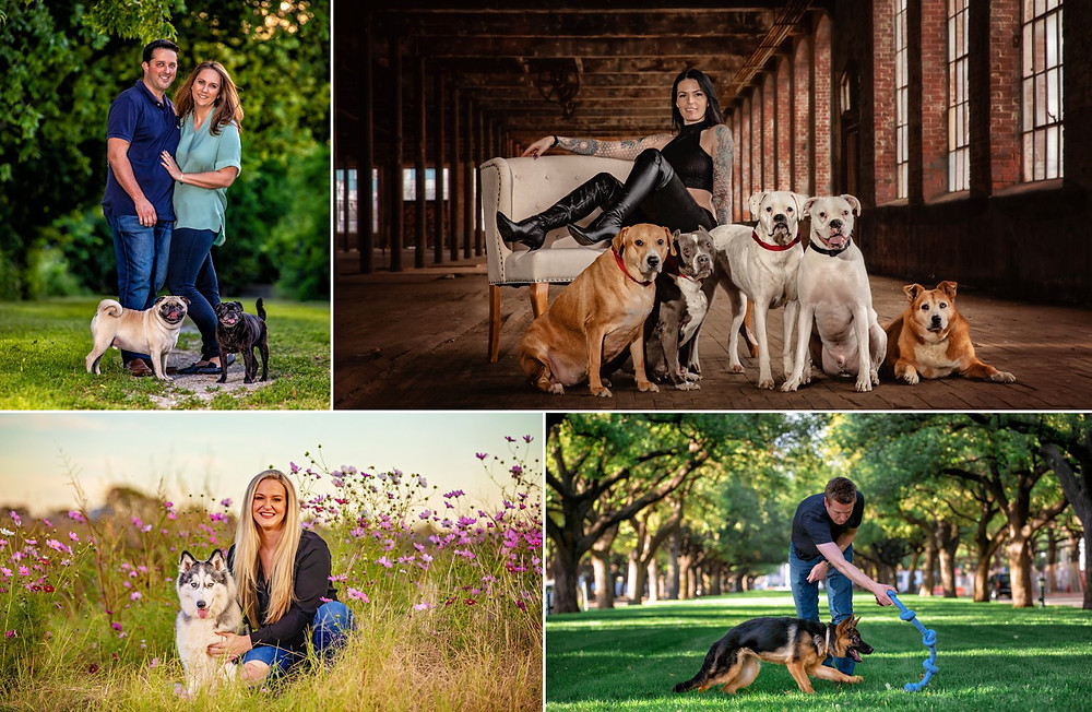 Dallas dog photographer | dog and people photography