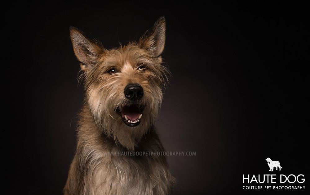 Sheepadoodle destination dog photography Orlando