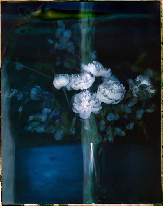 White_Flower_CPola_018.jpg