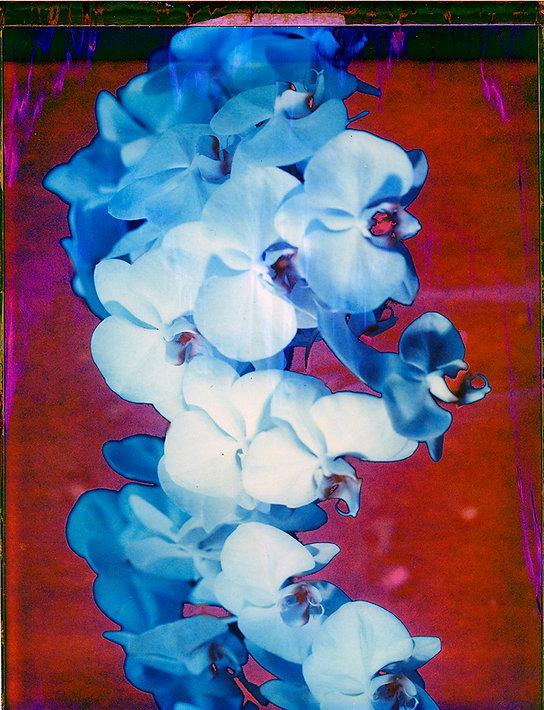 McHugh_Orchid_08.jpg
