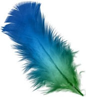 feather_edited.jpg