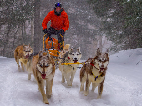Dog Sledding in a Snowstorm!
