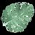 Les feuilles tropicales 5