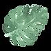 Folhas tropicais 5