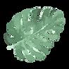 熱帯の葉5