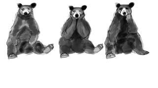 bear poses1.jpg