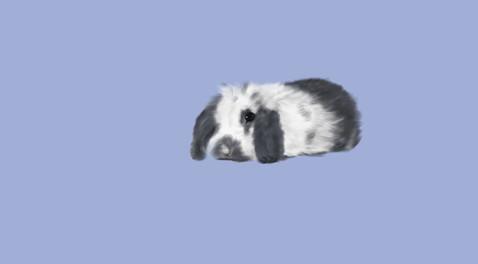 Bunny Study