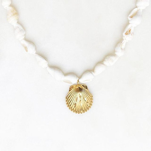 Spindle Choker Tropical Shell Reef By☆Nouck