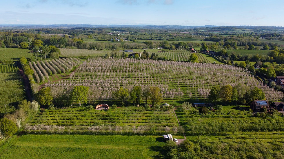 Aerial view of Dragon Orchard with The Big Hug and views afar over The Malvern Hills