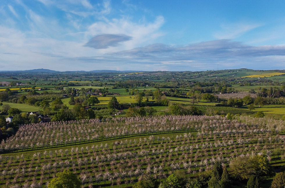 Aerial view of Dragon Orchard, Putley, Herefordshire in springtime blossom