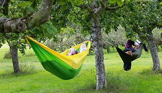 Person relaxing and reading a book in a hammock under apple trees