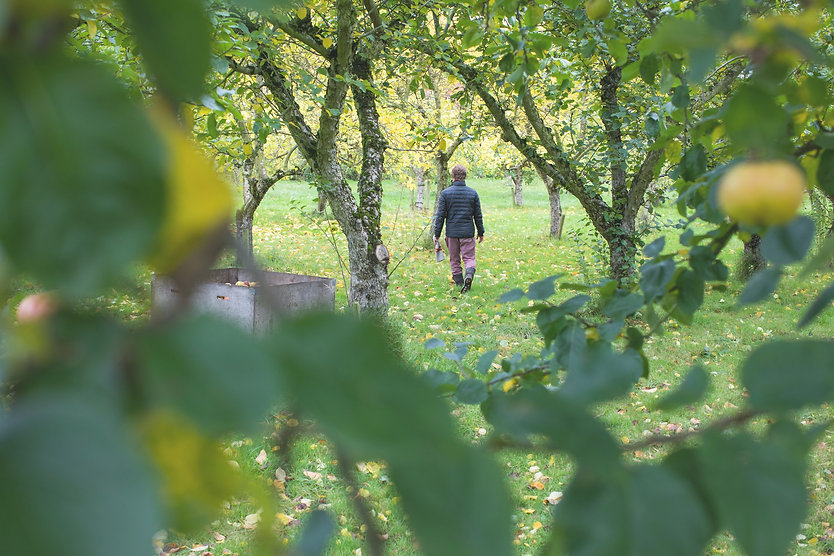 Orchard Bathing: Mindful connection with nature at Dragon Orchard