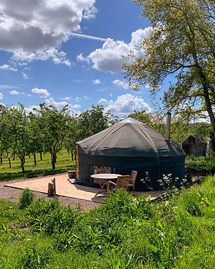 Beautiful view of Cai Yurt through the apple trees at Dragon Orchard on a blue sky sunny day