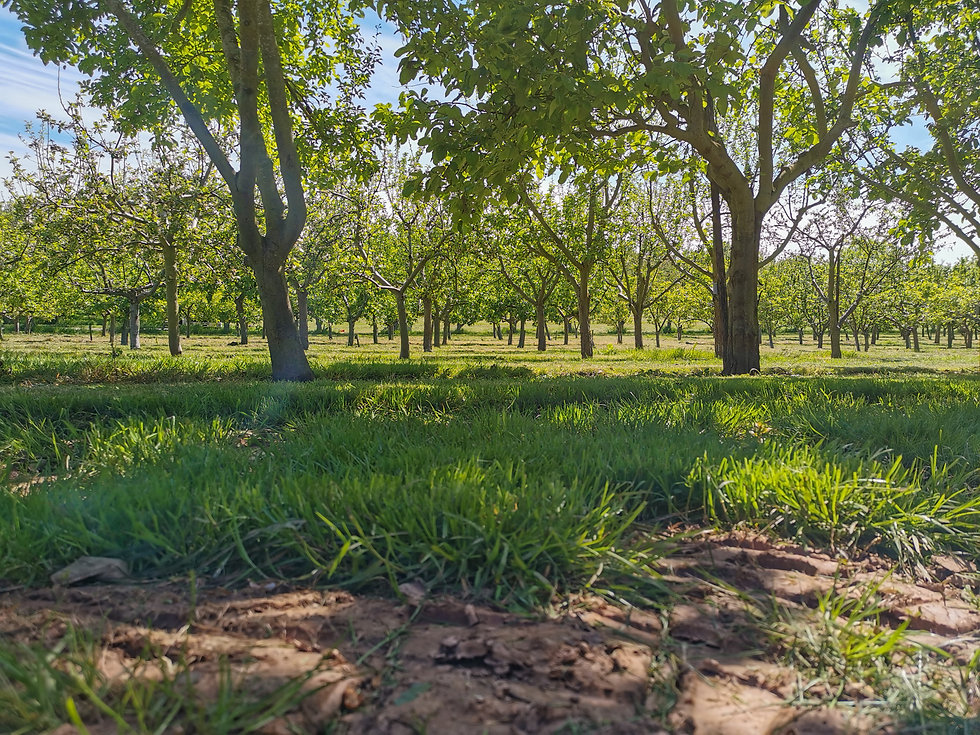 The Orchard Experience - view through the apple trees