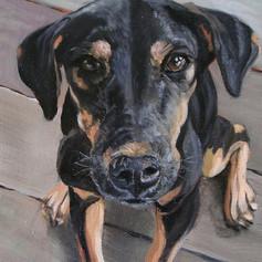 'Thai dog' Acrylic on canvas 12x18 inche