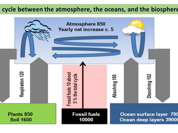 Anthropogenic CO2 in the atmosphere per the IPCC conflicts with the observed permille values laws