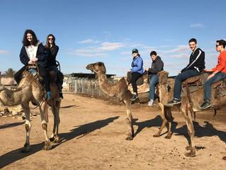 Bedouin Disney