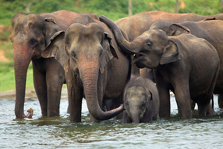 elephant-family-in-water.jpg