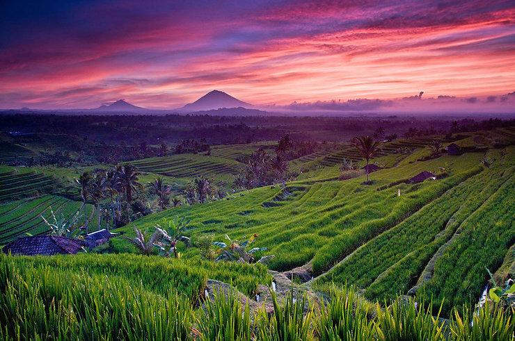 Bali 2_531_x_800.jpg