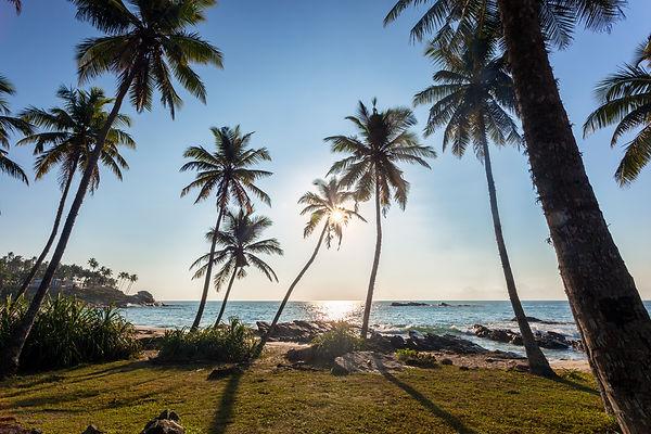 palm-on-beach-hdr.jpg