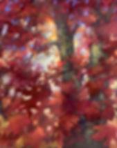 autumnlight500.jpg