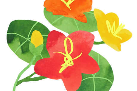 0008_Wildflower_008.JPG