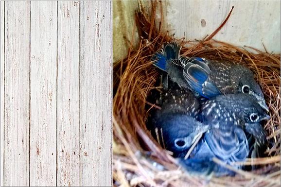 Bluebird in the Coal Mine?