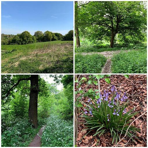 Colwick Woods - Spring.jpg