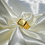 Thumbnail: Rich Ring