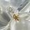 Thumbnail: Thailand Ring