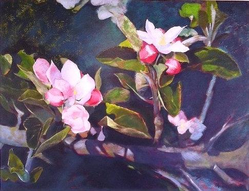 Apple Blossom Speaks for Itself